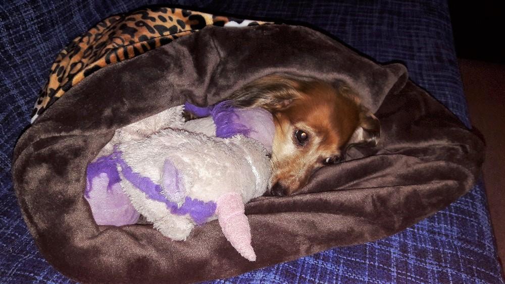 TermoPytlik hned zabydlený naší psí babičkou